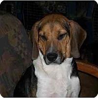 Adopt A Pet :: Boone - Albany, NY