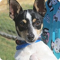 Adopt A Pet :: Eddie - Kingwood, TX