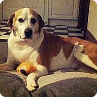 Adopt A Pet :: Isabella - Hamilton, ON