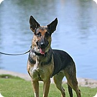 Adopt A Pet :: Vanna - Laguna Niguel, CA