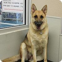 Adopt A Pet :: Ava - Gilbert, AZ