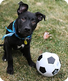 Lafayette Indiana Dogs For Adoption