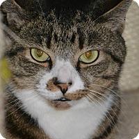 Adopt A Pet :: Randy - Morgantown, WV