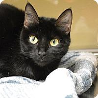 Adopt A Pet :: Allie - Worcester, MA