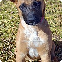 Adopt A Pet :: Willow - Bridgeton, MO