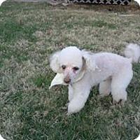 Adopt A Pet :: Skeeter - Davison, MI