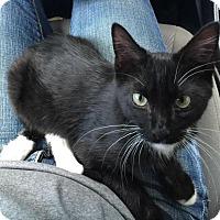 Adopt A Pet :: Ravioli - Smyrna, GA
