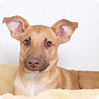 Adopt A Pet :: Hamilton - Sudbury, MA