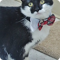 Adopt A Pet :: Stubbs - Chambersburg, PA