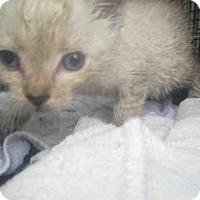 Adopt A Pet :: A383683 - San Antonio, TX