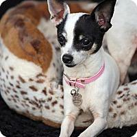 Adopt A Pet :: Cupcake - SAN PEDRO, CA