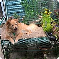 Adopt A Pet :: ZOA - Smiley - Aurora, IL