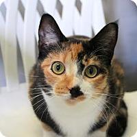 Adopt A Pet :: CAMI - Toledo, OH