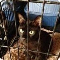 Adopt A Pet :: Marlowe - Manchester, NH