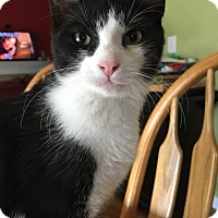 Adopt A Pet :: Sneezy - Middletown, OH