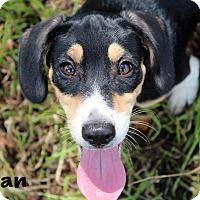 Adopt A Pet :: Brian - Texarkana, AR