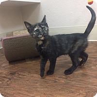 Adopt A Pet :: Jalapeño - Dublin, CA