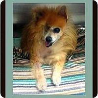 Adopt A Pet :: Coco - Murrieta, CA