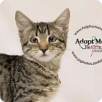 Adopt A Pet :: Fallon - Belton, MO