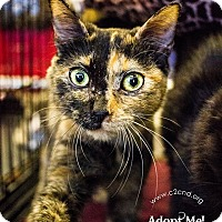 Adopt A Pet :: A..  Betty - Mooresville, NC