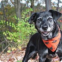 Adopt A Pet :: Ethel - New Castle, PA