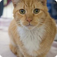 Adopt A Pet :: Red Cloud - Merrifield, VA