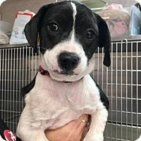 Adopt A Pet :: Ulita - Freeport, FL