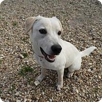 Adopt A Pet :: Noel - Waco, TX