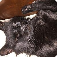 Adopt A Pet :: Taz - Tampa, FL