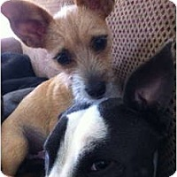 Adopt A Pet :: Oliver - Fresno, CA