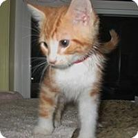 Adopt A Pet :: Addison - Shelton, WA