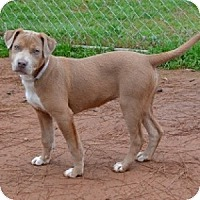 Adopt A Pet :: Tandy - Athens, GA