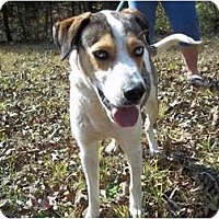 Adopt A Pet :: Lucky - Adamsville, TN