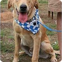 Adopt A Pet :: Nate - Cumming, GA