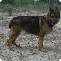 Adopt A Pet :: CARLY - SAN ANTONIO, TX