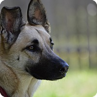 Adopt A Pet :: Cricket - Dripping Springs, TX