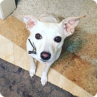 Adopt A Pet :: Lila - Mission Viejo, CA