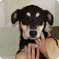 Adopt A Pet :: Lola - Oviedo, FL