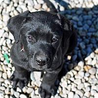 Adopt A Pet :: Emmet *AVAILABLE 4/13/16* - Pleasant Plain, OH