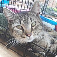 Adopt A Pet :: Bagherra $20 - Lincolnton, NC