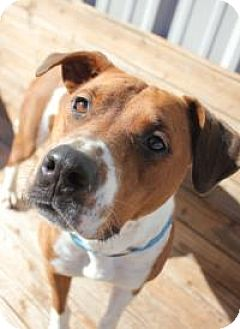 Boxer Mix Dog for adoption in Yukon, Oklahoma - Sienna
