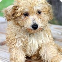 Adopt A Pet :: Dametrius - Waldorf, MD