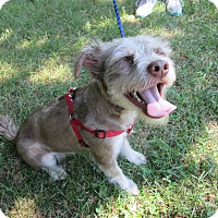 Adopt A Pet :: Chewy - Monroe, CT