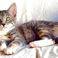 Adopt A Pet :: Twiggy - Potomac, MD