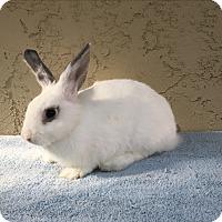Adopt A Pet :: Erin - Bonita, CA