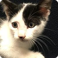 Adopt A Pet :: Crackle - Watauga, TX