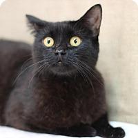 Adopt A Pet :: Twilight - Midland, MI