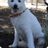 Adopt A Pet :: Morgan - Palo Alto, CA