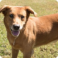 Adopt A Pet :: Rudy - Laplace, LA