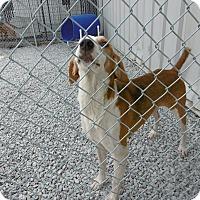 Adopt A Pet :: Jim - Barco, NC